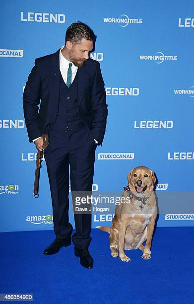 Tom Hardy and his dog Woody attend the UK Premiere of 'Legend' at Odeon Leicester Square on September 3 2015 in London England