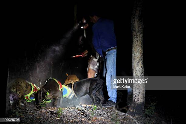 Tom Nevins kills a boar as his pigdogs bail and hold it during hunting as part of the 2011 Cooktown Hog Hunt at Silver Plains Station on October 7...