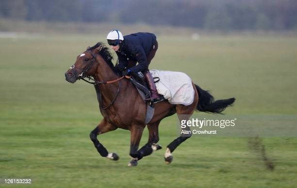 Tom Queally riding Frankel exercises prior to running at the 'Champions Day' meeting at Ascot racecourse on October 15th at Newmarket racecourse on...
