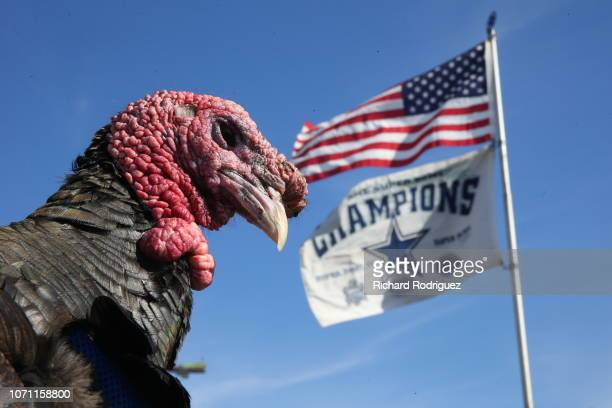 Tom the Tailgate Turkey hangs out before the game between the Washington Redskins and the Dallas Cowboys at AT&T Stadium on November 22, 2018 in...