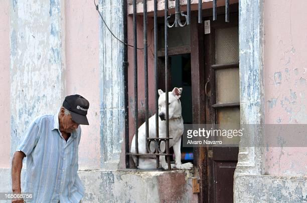 CONTENT] Tomada en La Habana Cuba Un hombre cabizbajo pasa mientras un perro pareciera reconocerlo