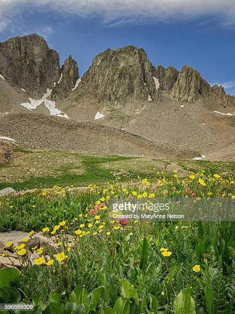 Tomahawk Basin wildflowers