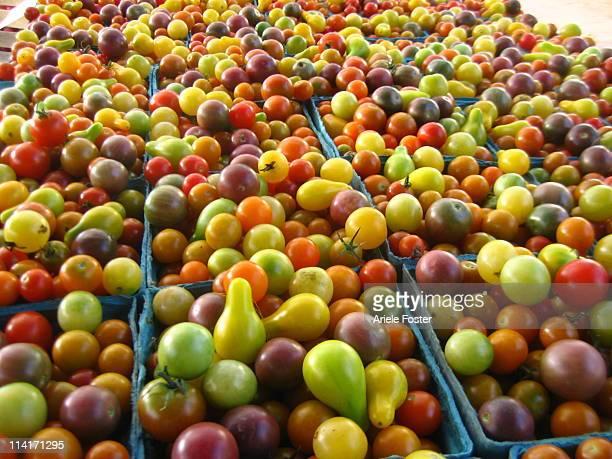 Tomato Color Explosion
