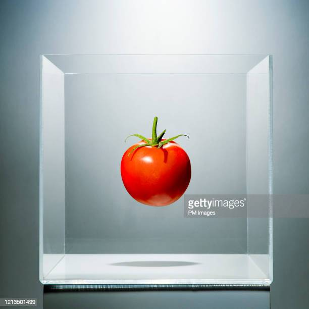 tomato in a clear box - antioxidant stock pictures, royalty-free photos & images
