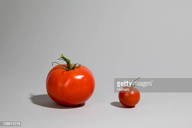 a tomato next to a cherry tomato - comparison stock photos and pictures