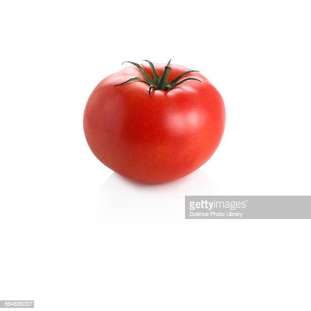 tomato - tomato stock pictures, royalty-free photos & images
