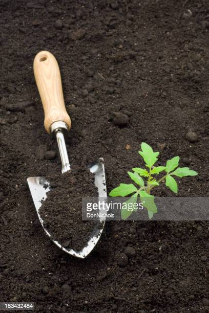 Tomato Plant and Trowel