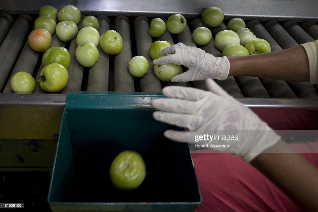 The FDA Focuses On Florida And Mexico In Tomato Salmonella Investigation : News Photo