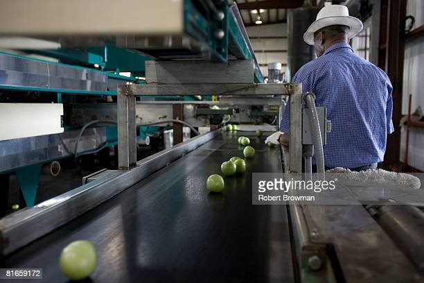Tomatoes are inspected as part of quality control at West Coast Tomato June 21 2008 in Palmetto Florida The Food and Drug Administration sent...