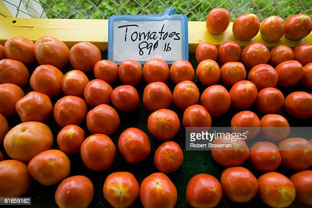 Tomatoes are lined up for sale at Sunshine Produce June 21 2008 in St Petersburg Florida The Food and Drug Administration sent officials to Florida...