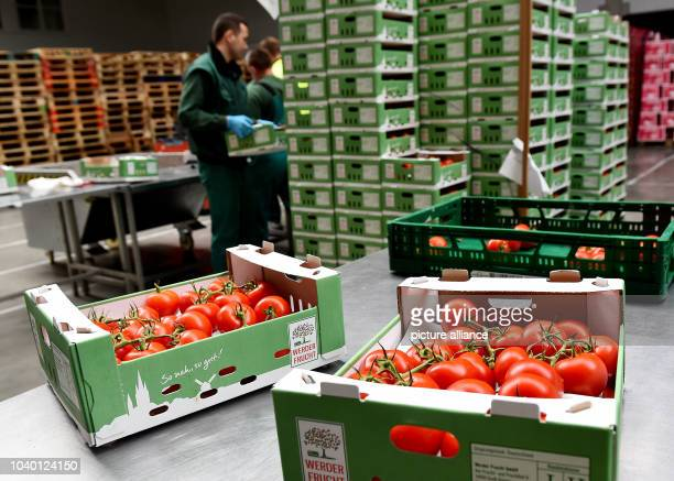 Tomatoes are ready for delivery in the halls of Werder Frucht GmbH in Gross Kreutz, Germany, 5 August 2016. The company does the organisation and...