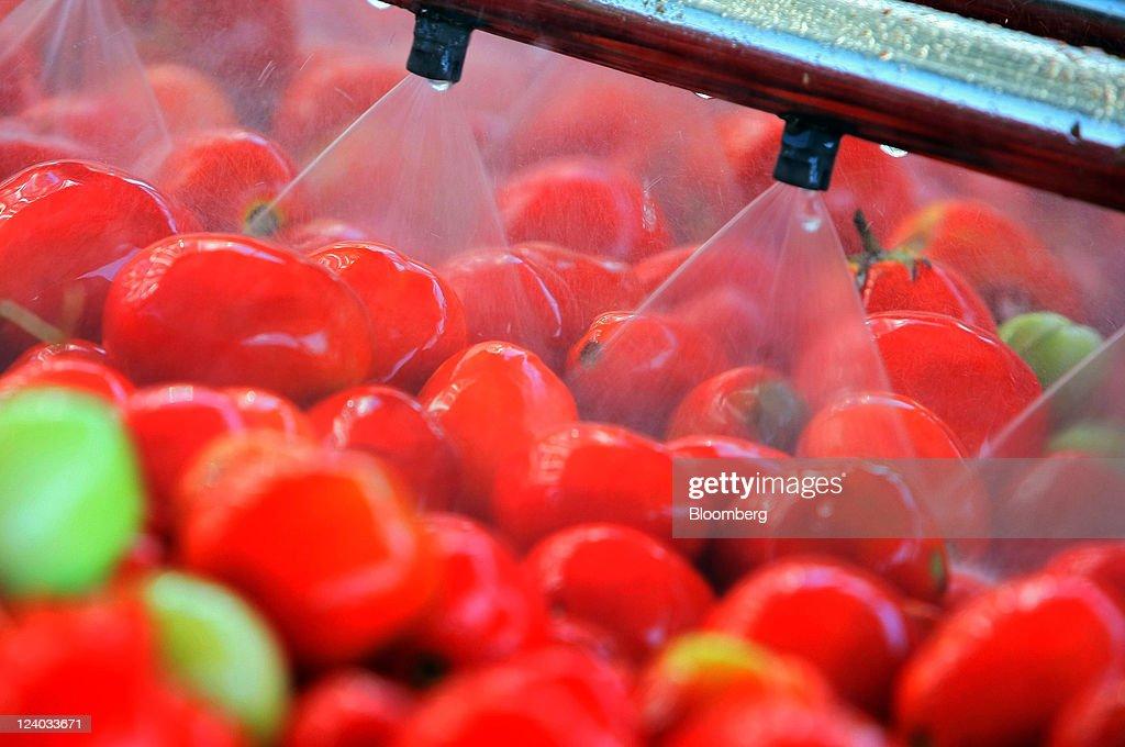 Inside Nectar Balkan Fruit And Vegetable Processors : News Photo