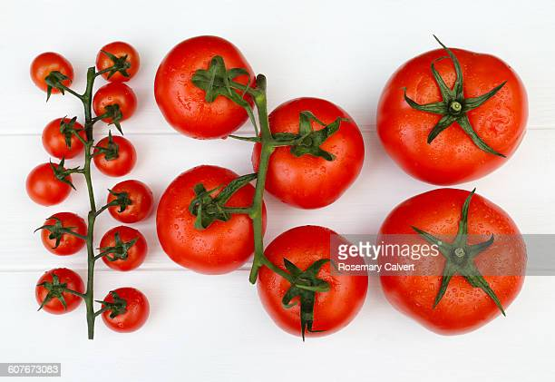Tomatoes arranged in order of size, small to large