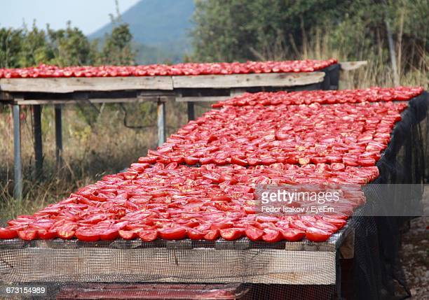 tomatoes arranged on tables - fedor stock pictures, royalty-free photos & images
