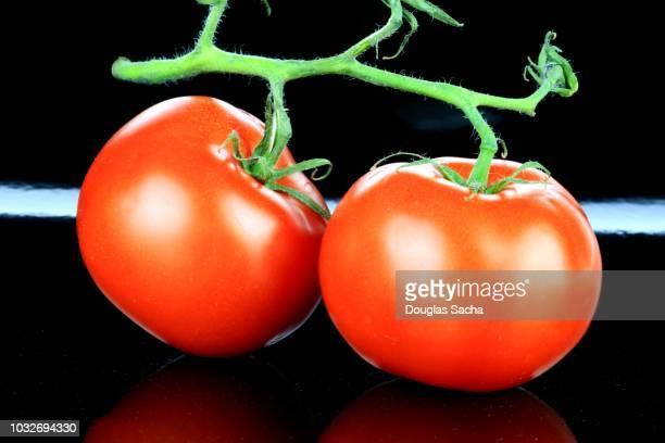 tomatoes on a plant stem (solanum lycopersicum) - plant de tomate photos et images de collection