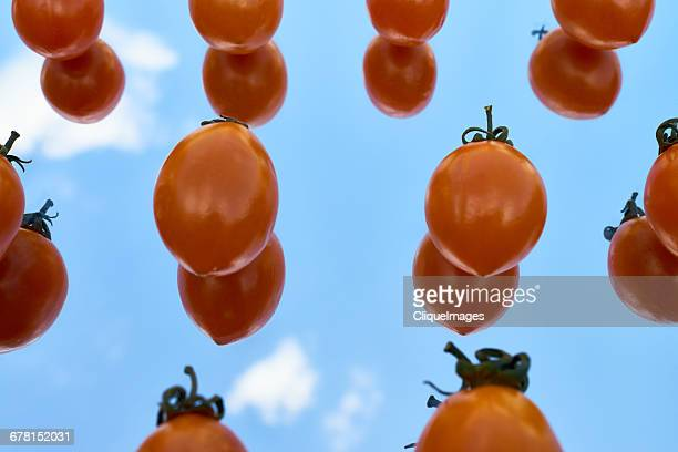 tomatoes on glass - cliqueimages stockfoto's en -beelden