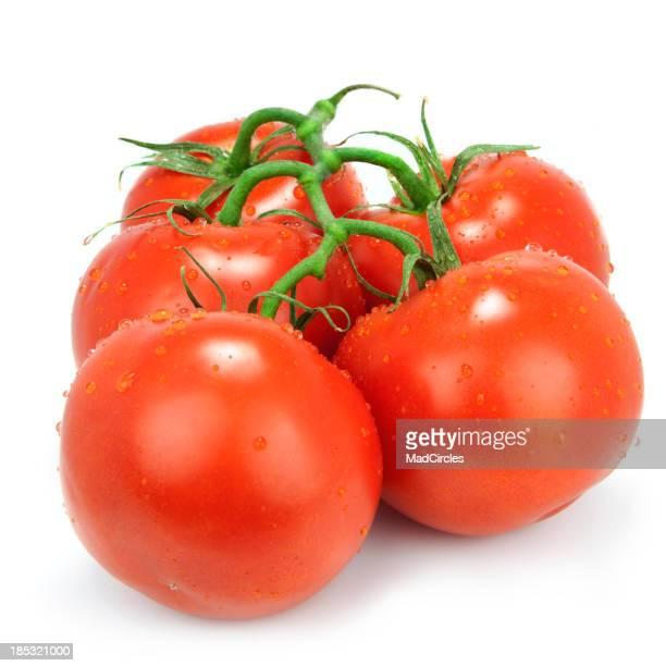 Tomaten auf der vine