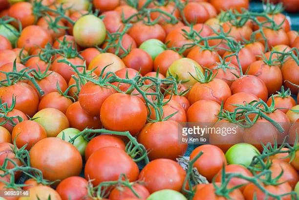 tomatoes on the vine - ken ilio stock pictures, royalty-free photos & images