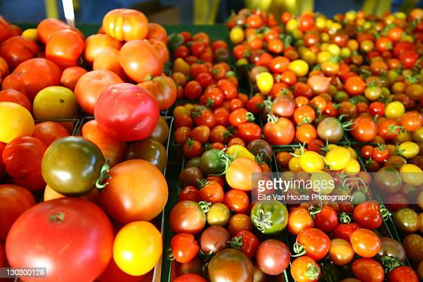 tomatoes - ellie price stock pictures, royalty-free photos & images