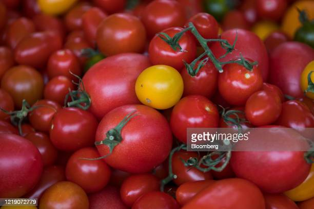 Tomatoes sit on display on a market stall in Norwich, U.K., on Tuesday, June 9, 2020. With the economy on course for its deepest recession for at...