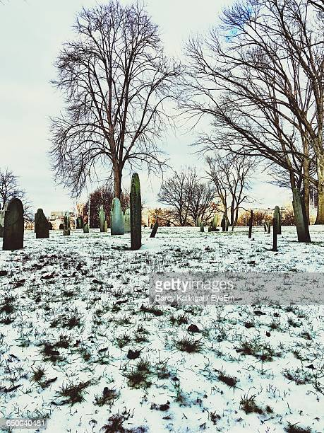 Tombstones And Bare Trees On Snowy Field