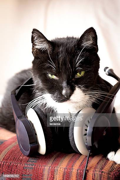 tomcat with earphones