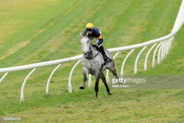 Tommy Berry on Chautauqua gallops in a barrier trial during Sydney Racing at Rosehill Gardens on August 25 2018 in Sydney Australia