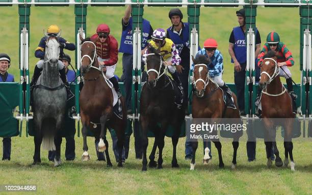 Tommy Berry on Chautauqua jumps late in it's barrier trial during Sydney Racing at Rosehill Gardens on August 25 2018 in Sydney Australia