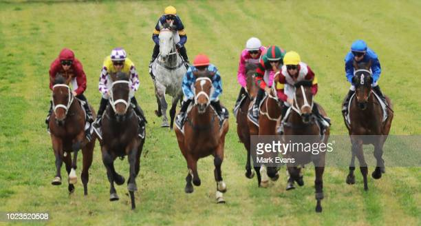 Tommy Berry on Chautauqua jumps late in it's trial during Sydney Racing at Rosehill Gardens on August 25 2018 in Sydney Australia