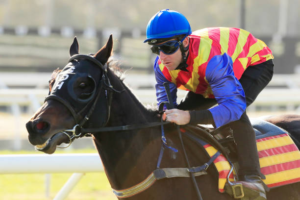 AUS: Warwick Farm Barrier Trials