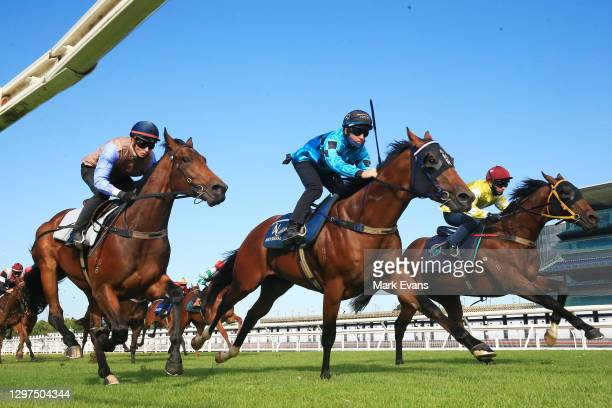 Tommy Berry on Verne wins heat 3 during barrier trials at Royal Randwick Racecourse on January 21, 2021 in Sydney, Australia.