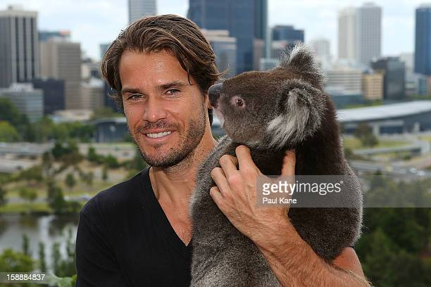 Tommy Haas of Germany holds a Koala on a visit to Kings Park during day six of the Hopman Cup at Perth Arena on January 3 2013 in Perth Australia