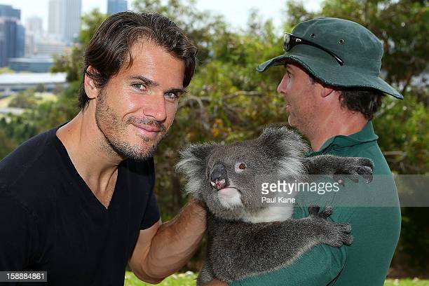 Tommy Haas of Germany poses with a Koala on a visit to Kings Park during day six of the Hopman Cup at Perth Arena on January 3 2013 in Perth Australia