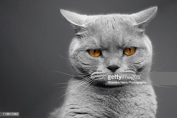 tommy the grumpy - manchester reino unido fotografías e imágenes de stock