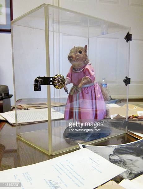 Tommy Tucker the famous crossdressing squirrel from the 1940s now resides in a plastic box in a lawyer's office in Prince George's County Maryland on...