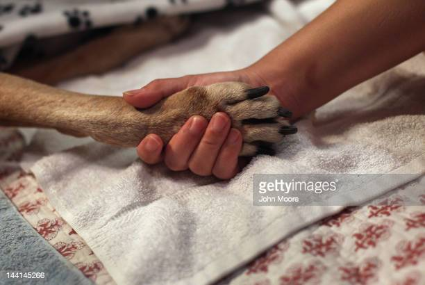 Tomo McLoyd holds the paw of her dog Rocky as veterinarian Wendy McCulloch euthanizes the pet at their apartment on May 9 2012 in New York City...