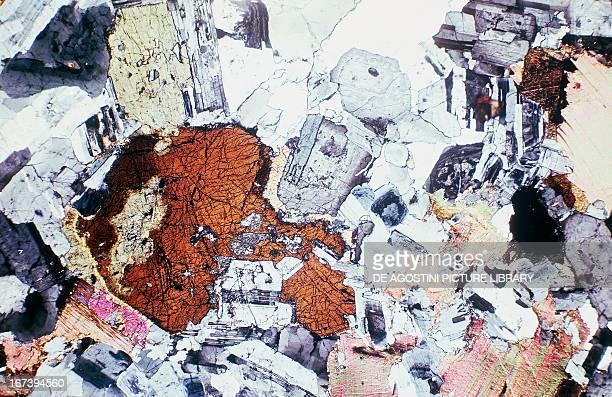 Tonalite holocrystalline magmatic rock thin section using crossed Nicols x19x15
