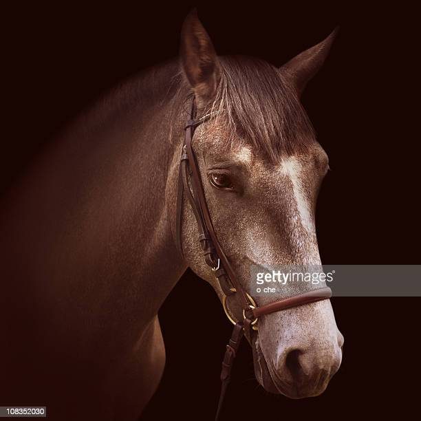 Toned portrait of horse in beautiful bridle
