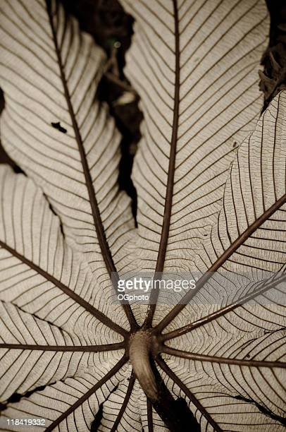 toned tropical leaf - ogphoto stock photos and pictures