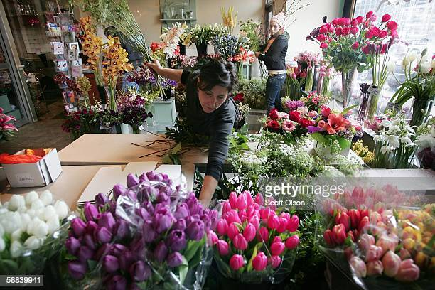 Toni Mangeri and Anna Spektor prepare flowers in the Kabloom flower shop February 13 2006 in downtown Chicago Illinois Valentine's Day is the shops...