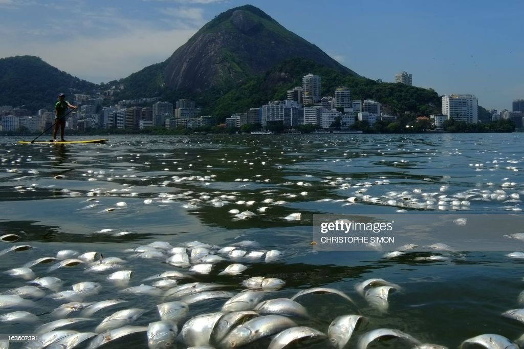 Tons of dead fish float on the waters of the Rodrigo de Freitas lagoon, beside the Corcovado mountain in Rio de Janeiro, Brazil on March 13, 2013.