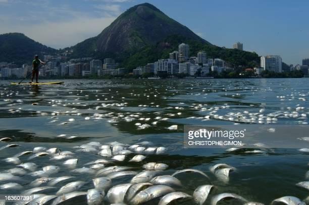 Tons of dead fish float on the waters of the Rodrigo de Freitas lagoon beside the Corcovado mountain in Rio de Janeiro Brazil on March 13 2013 AFP...