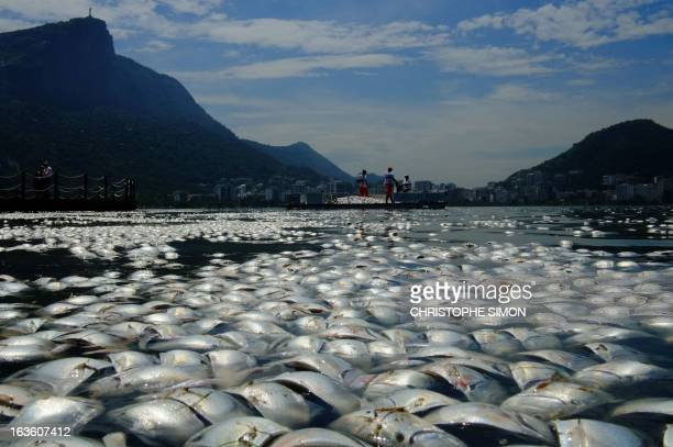 Tons of dead fish float on the waters of the Rodrigo de Freitas lagoon beside the Corcovado mountain in Rio de Janeiro Brazil on March 13 2013 AFP...