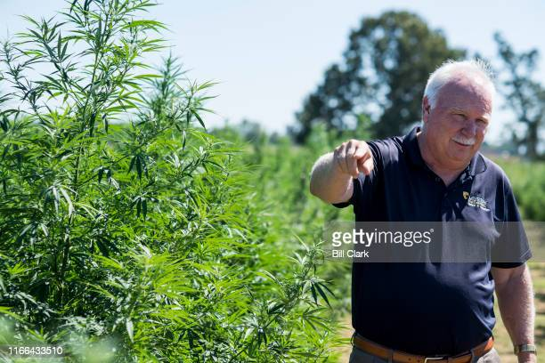 Tony Brannon Dean of the Hutson School of Agriculture at Murray State University talks about hemp production in the Universitys hemp field in Murray...