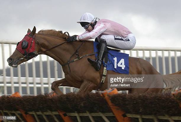 Tony McCoy and Desert Air lead the field home to land Division 1 of The Hanson Aggregates Novices Hurdle Race run at Taunton Racecourse on January 28...
