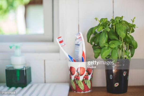 toothbrush holder by houseplant on shelf against white wall in bathroom - toilet planter stock pictures, royalty-free photos & images