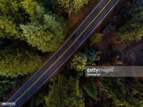 Top Down Shot of Empty Road Through Forest