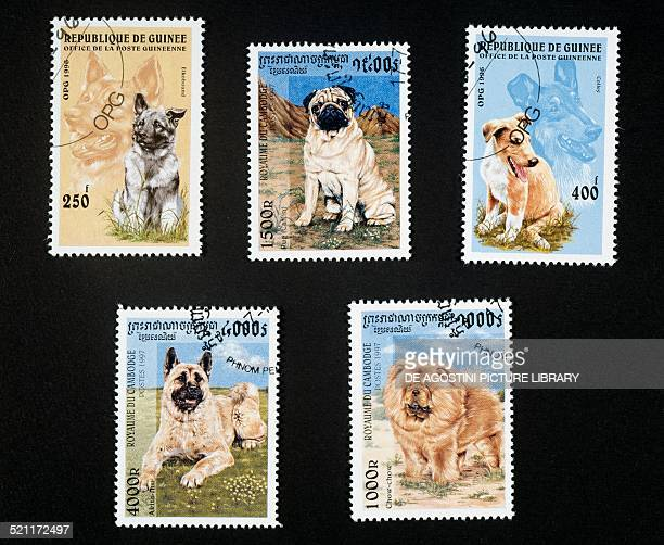 Top left and right postage stamps honouring puppies and dogs depicting an Elkhound and Collie Republic of Guinea top centre and bottom postage stamps...