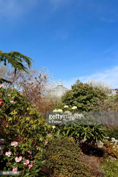 Top of palm house, seen through foliage.