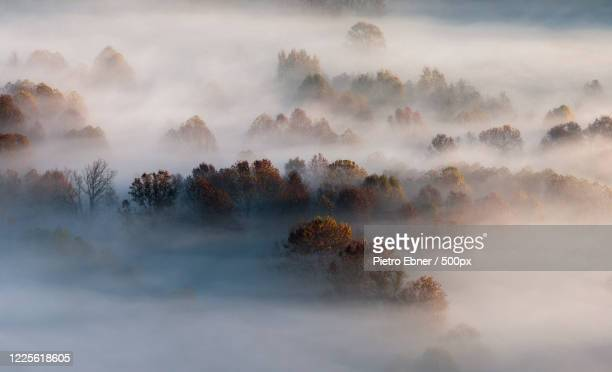 top of trees in forest in morning fog, airuno, lombardy, italy - pietro ebner foto e immagini stock